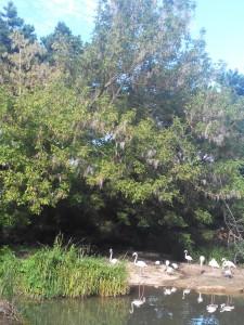 Si si je vous jure, ils sont dans les arbres.