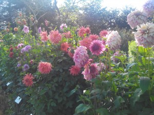 Zolies fleurs ^^