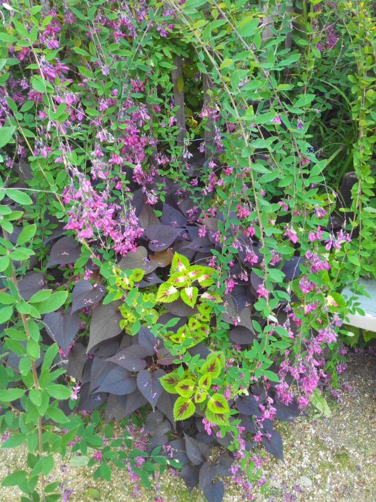 Y a des jolies plantes aussi.
