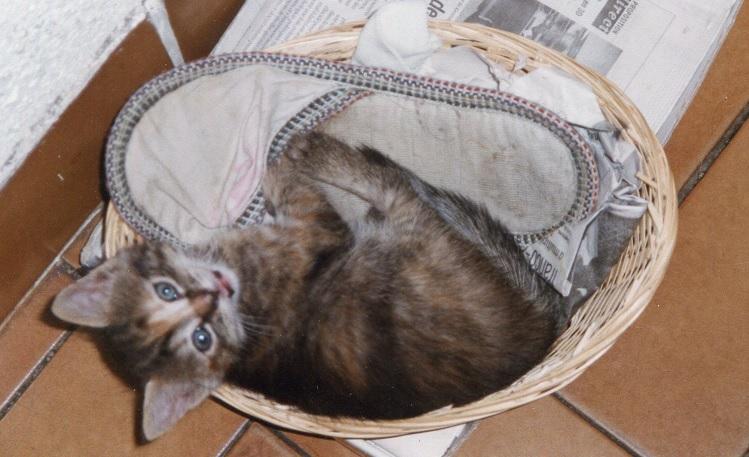 Et ça c'est Chipie, il y a très longtemps, la dernière minette de mes parents. Vous voyez, on l'a pas eue grande, mais rassurez-vous, elle a bien vécu (17 ans)...